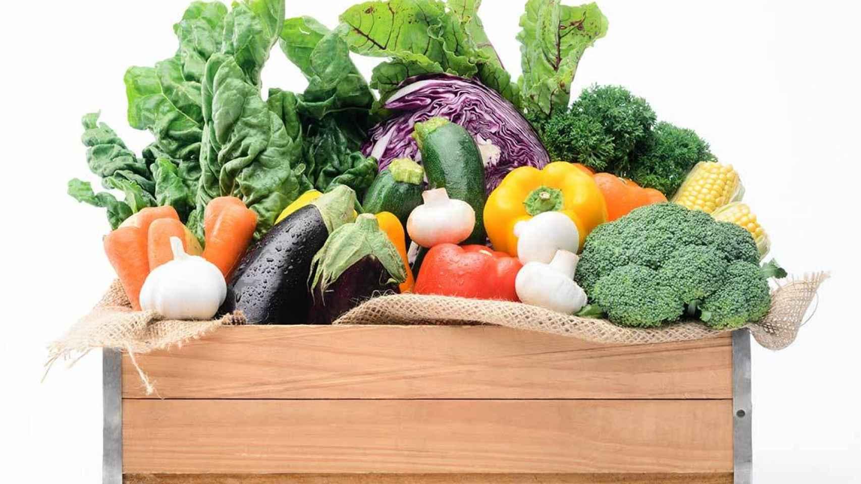 Cesta de vegetales y hortalizas procedentes de una huerta ecológica.