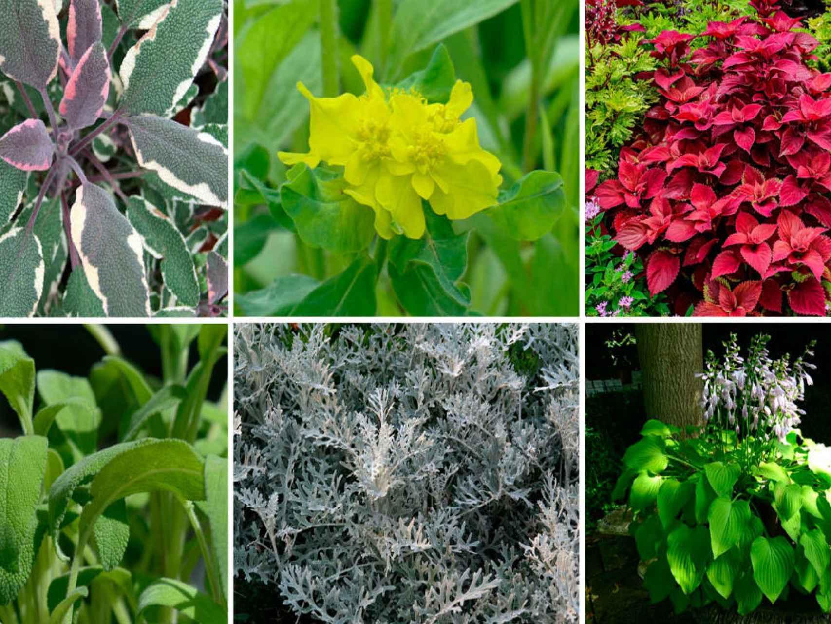 Plantas de hojas para usar en ramos. / Los Peñotes