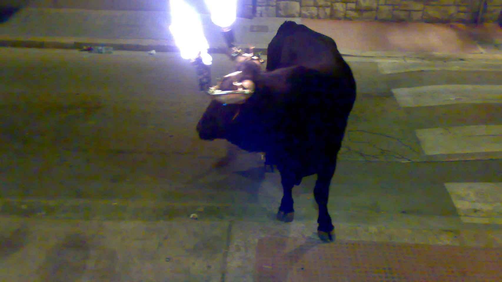 Un toro embolado en Godella (Valencia).