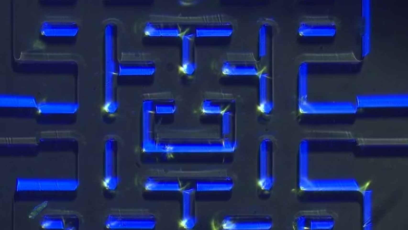 Imagen del minilaberinto usado en el experimento.