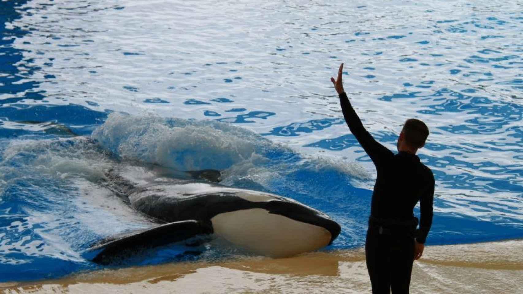 Uno de los cuidadores de Orca Ocean en Tenerife.