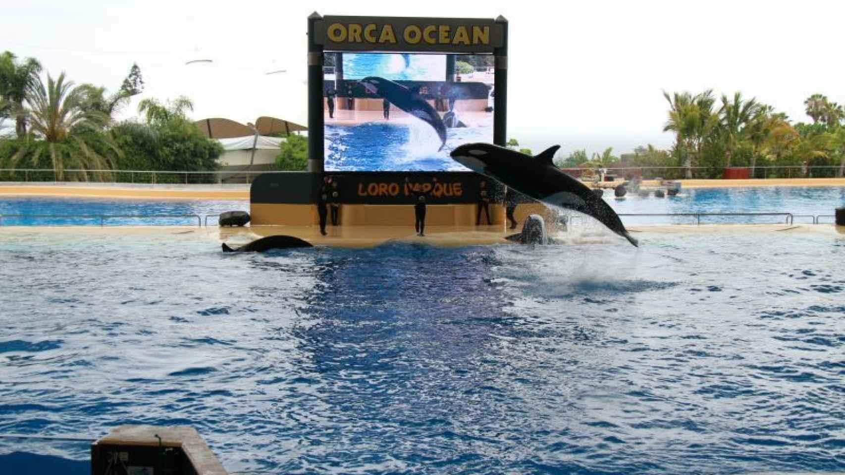Un show en Orca Ocean.