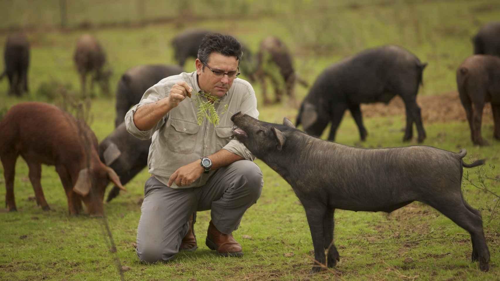 Manuel, socio de Sergio, alimentando uno de los cerdos de Acornseekers.