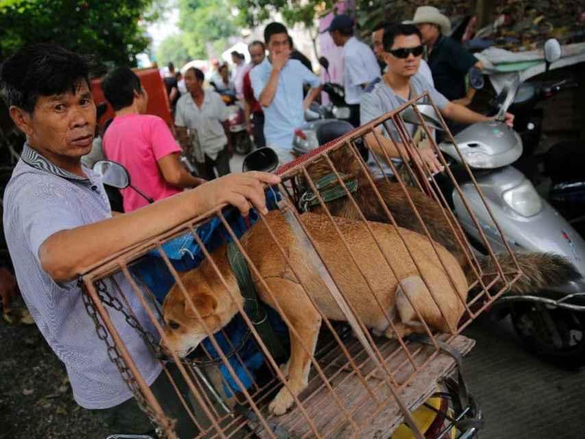 El festival de Yulin, donde se comen miles de perros.