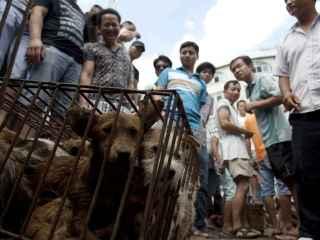 Perros enjaulados en el Festival de Yulin.