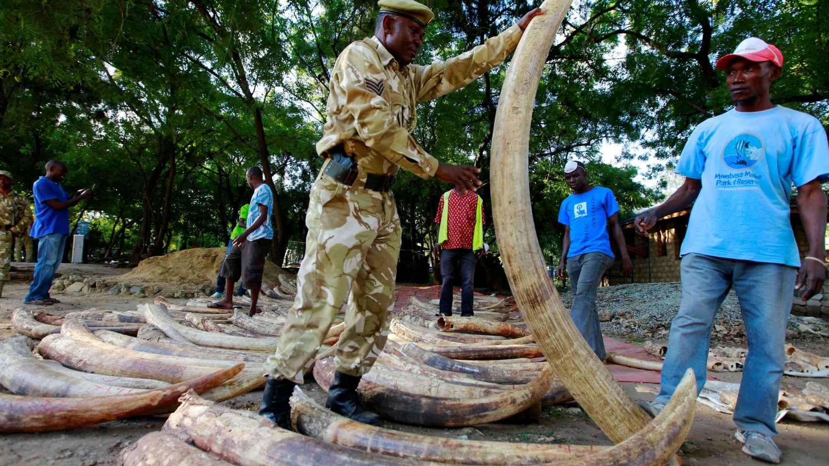 Un soldado keniano sostiene el marfil interceptado a unos traficantes.