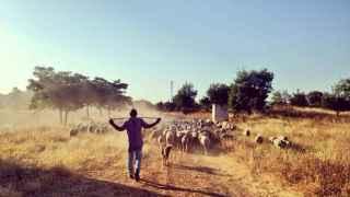 El camino del ganado.