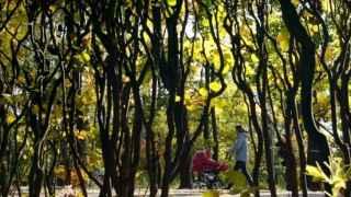Una mujer pasea por un parque.