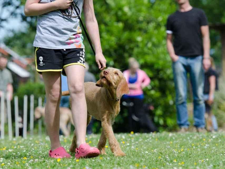 El estudio ayuda a mejorar el adiestramiento de perros