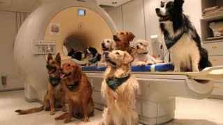 Los perros que participaron en el experimento.