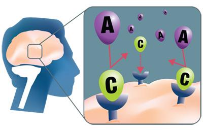 receptor-adenosina