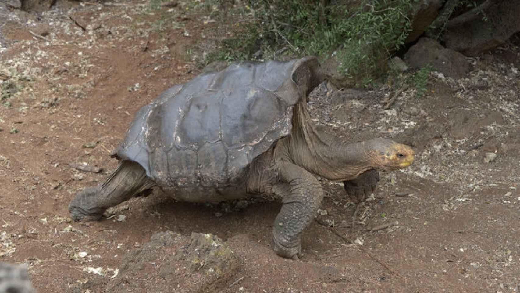 La tortuga Diego