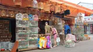 Una tienda de pájaros.