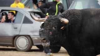 Maltrato animal documentado por el PACMA