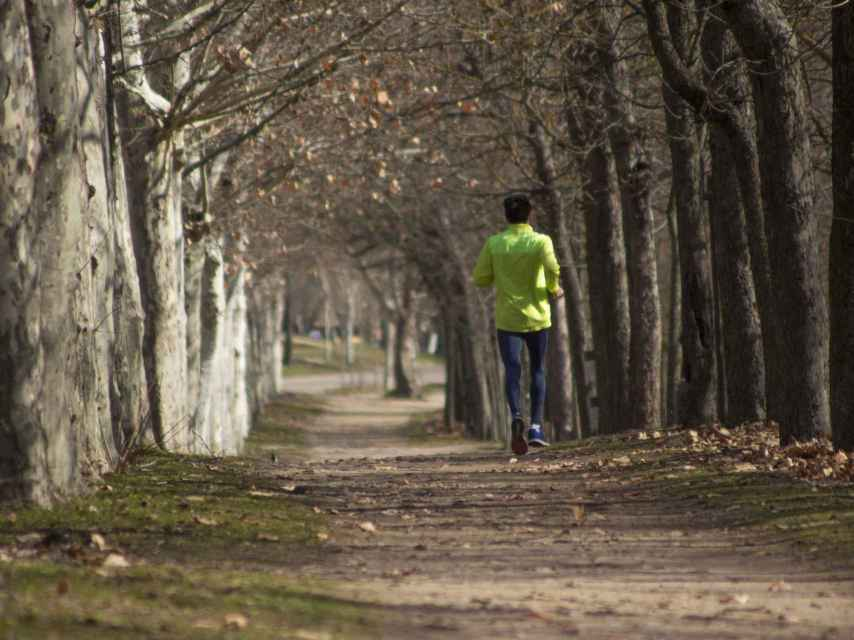 Un runner en mitad del bosque.