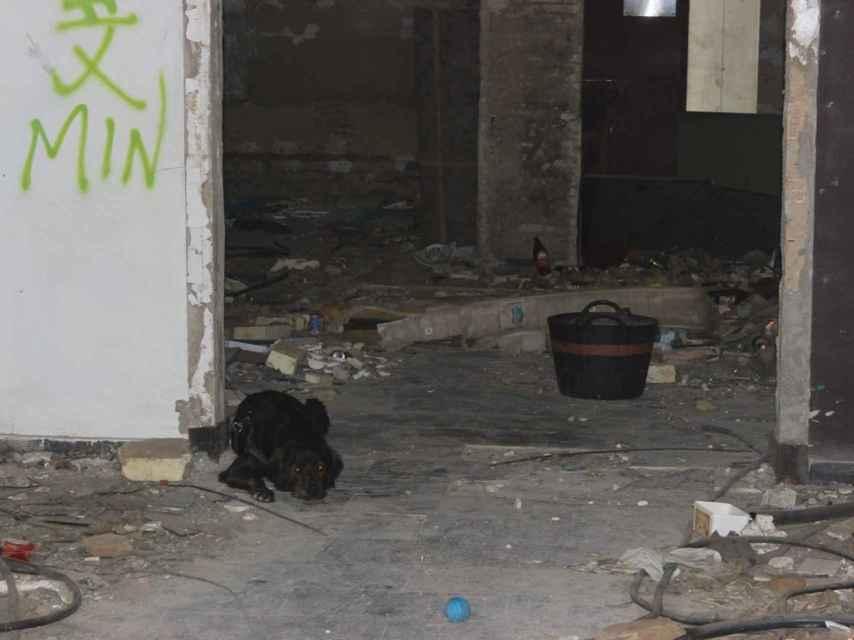 El perro de unos indigentes, atado a lo que en su momento fue la barra de The Face
