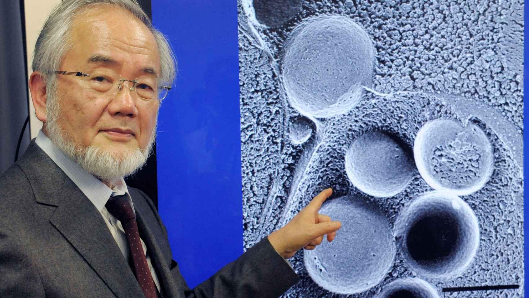 Yoshinori Ohsumi, padre de las células que reciclan, Nobel de Medicina 2016
