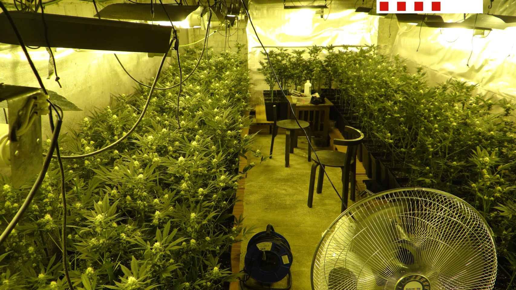 Las 'casas verdes': así funcionan las industrias familiares de la marihuana en España