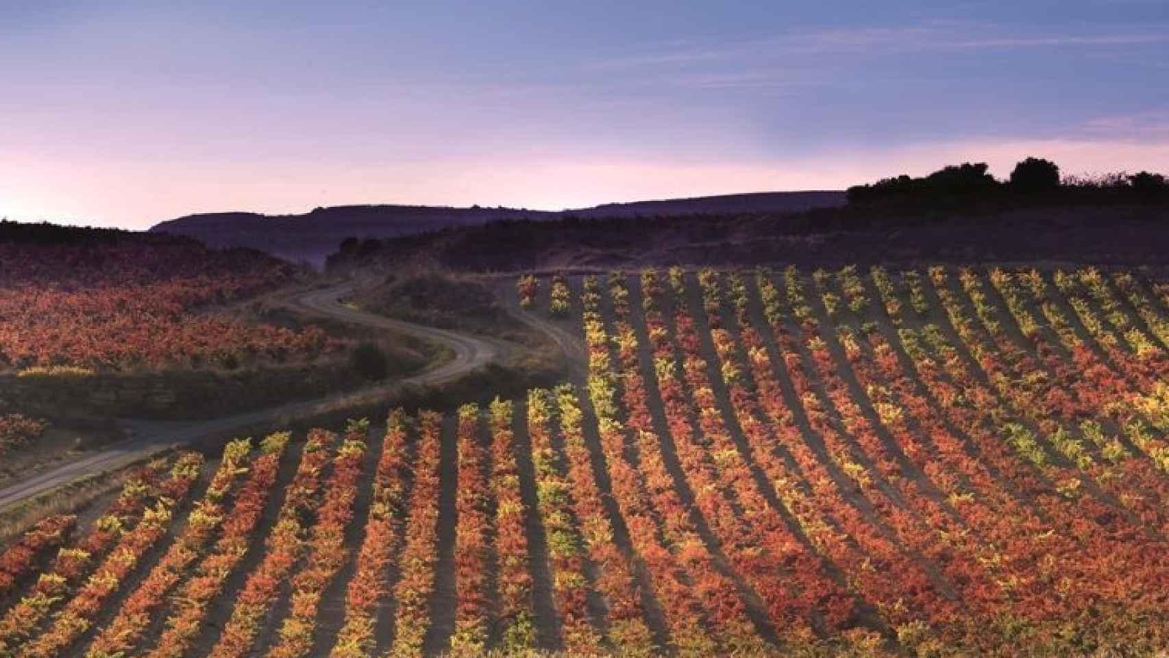 Paisaje entre viñedos en Haro, en la Rioja Alta.