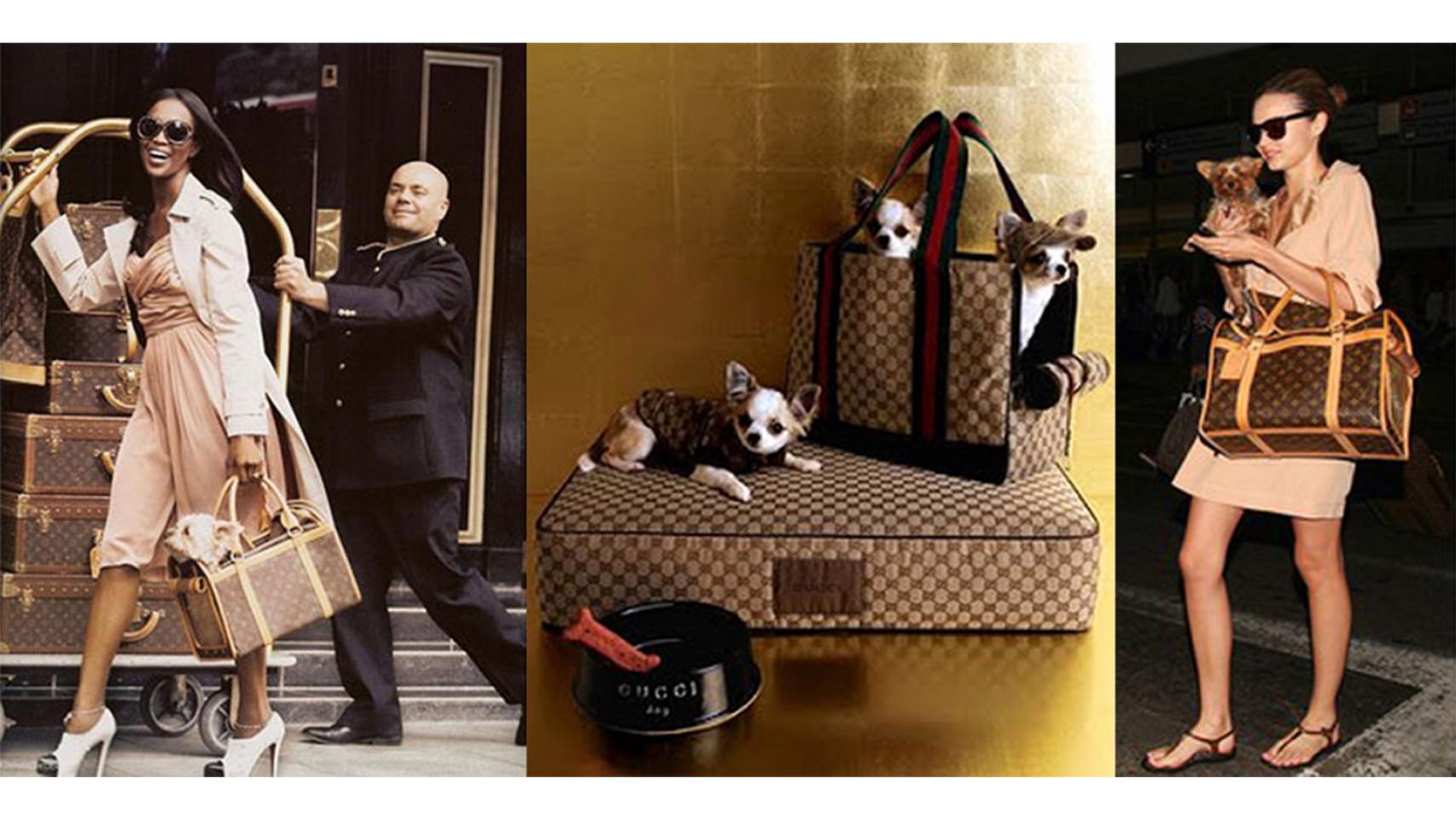 Los bolsos de Gucci y Louis Vuitton llevando a perr@s con estilo.