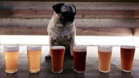 Los seis tipo de cerveza artesana que elaboran en la Fábrica Maravillas.