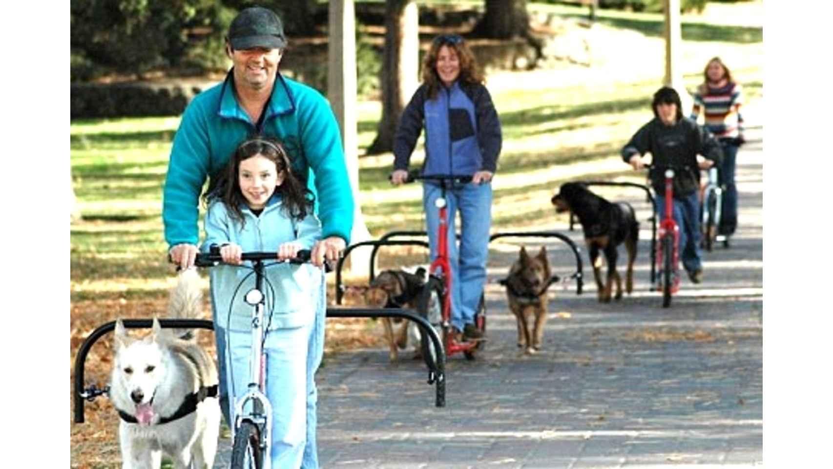 Transportes originales para llevar a más de un perro yendo en bicicleta.