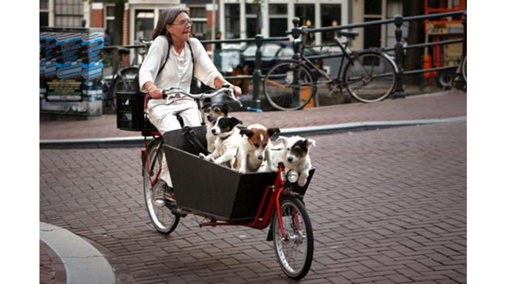 Hay transportines que permiten llevar a varias mascotas a la vez.