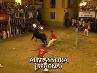 Un toro embolado en la Plaza Mayor de Almassora.