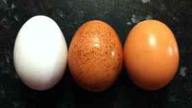Los huevos vuelven a estar bajo sospecha en Europa.