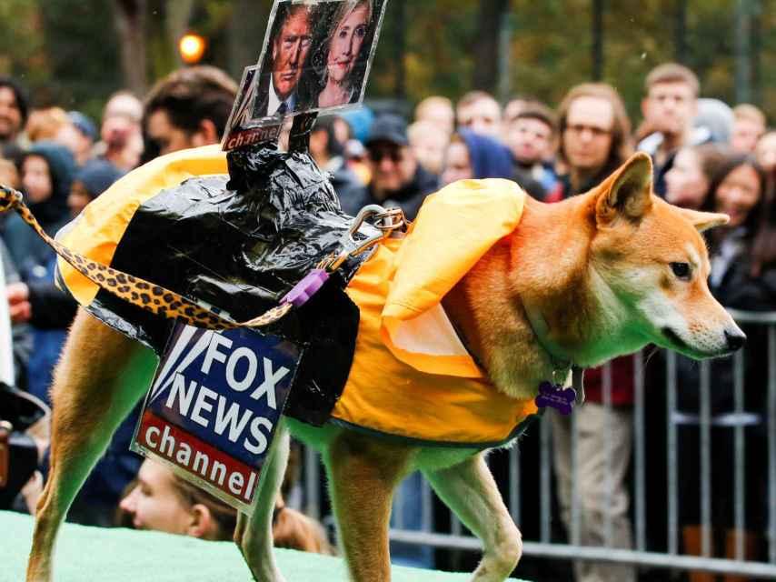 Un perro disfrazado del canal de televisión Fox participa en la fiesta canina de Halloween 2016 en Nueva York.