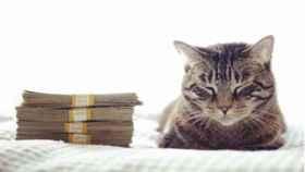 Así es Cash cats, la cuenta que aúna las dos cosas que más te gustan de la vida: los gatitos y tener dinero