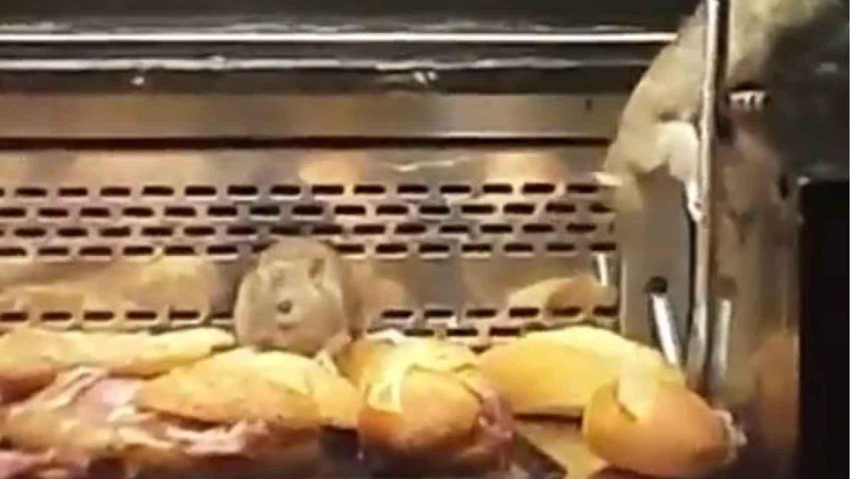 Imagen de las ratas del vídeo grabado por una viandante.