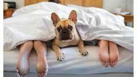 Hoteles de montaña y… ¡puedo ir con mi perro!