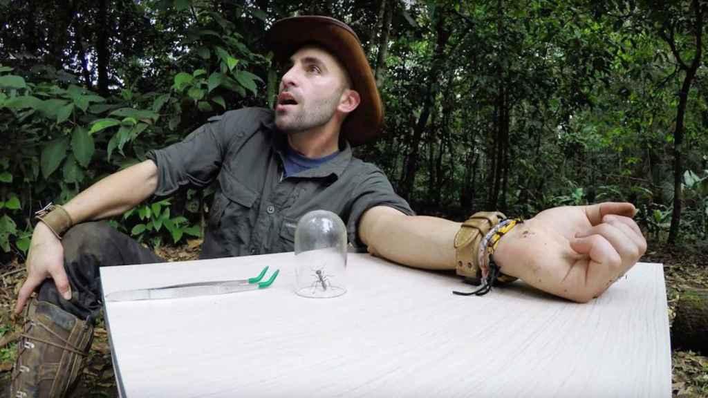 Coyote Peterson, a punto de experimentar en sus carnes la picadura de la hormiga bala.