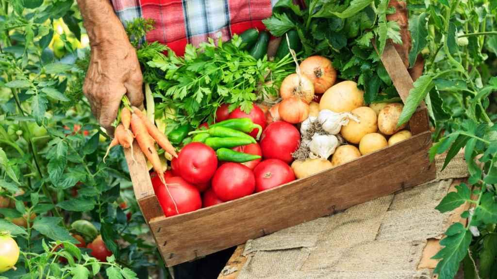 Los alimentos ecológicos cuidan nuestra salud.