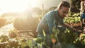 Cómo introducir productos ecológicos en tu dieta