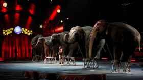 Fotografia del circo Ringling Bros de Estados Unidos.
