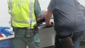 Intervienen 531 kilos de almeja japonesa no depurada en Huelva