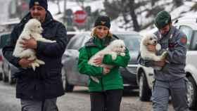El equipo de rescate con los tres cachorros que han sobrevivido al alud