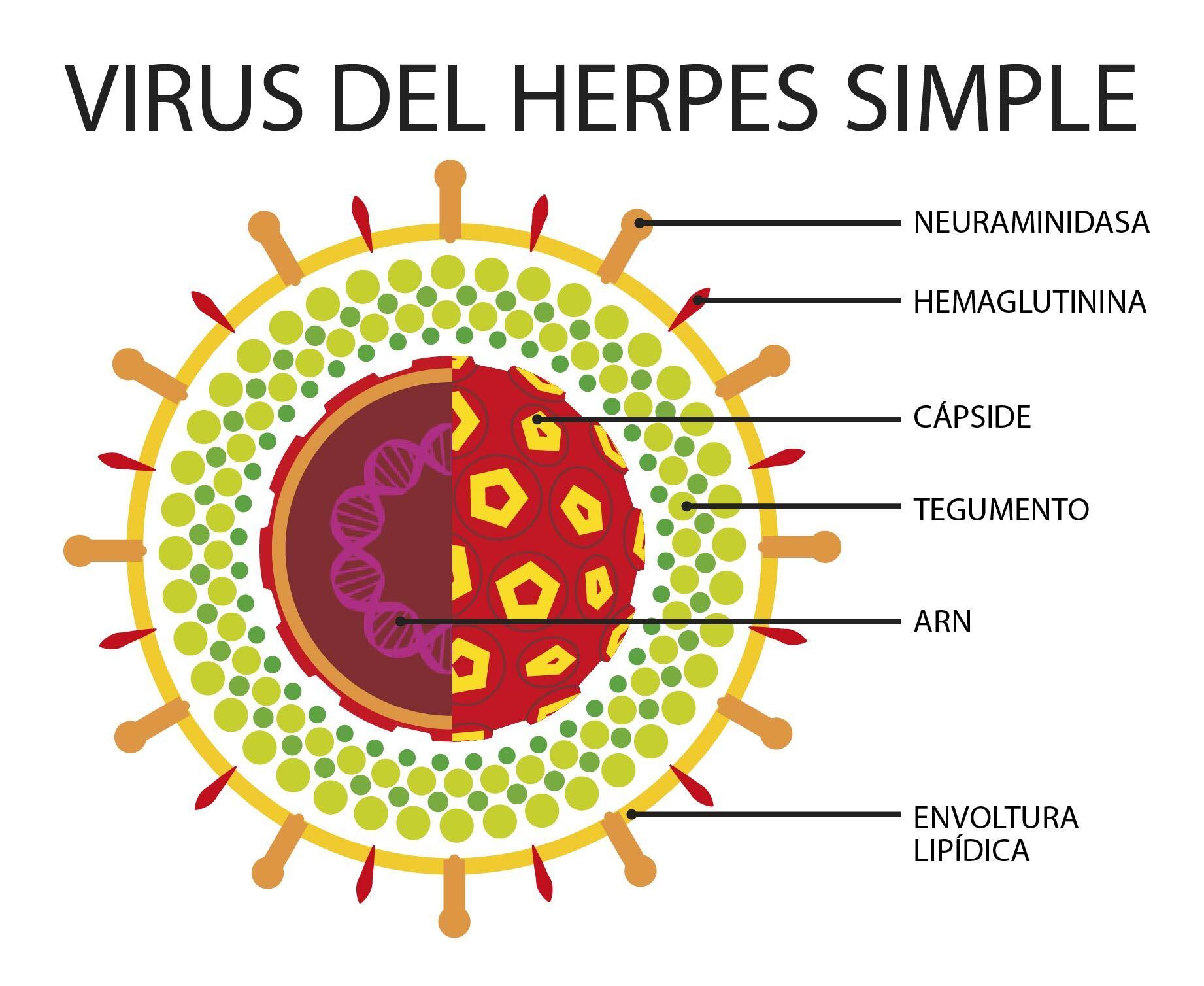 virusi herpes)