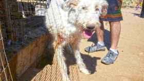 Piden 40 años de cárcel para el cazador de Madrid acusado de maltratar a 54 perros