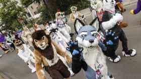 Los furries son marchas de grupos con trajes de mascota. Se han popularizado en EEUU.