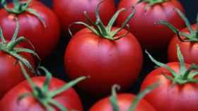 Sabor del tomate