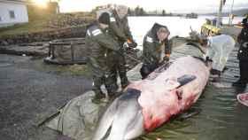 El cuerpo de la ballena sacrificada