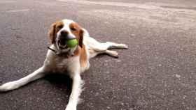 zamora perro desaparecido