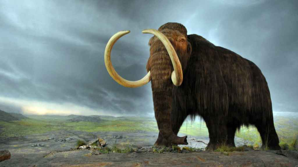 Reproducción de un mamut lanudo en el Royal BC Museum de Victoria, Canadá.