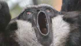 Los perros y los monos te juzgan cuando haces algo mal