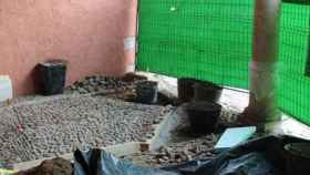 Obras empedrado Plaza del Grano
