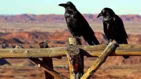 zamora cuervos