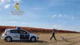 guardia civil perros-de-busqueda